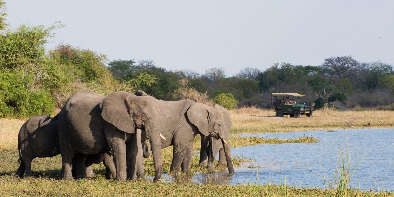 Elephants-Central-African-Wilderness-Safaris-1380x690