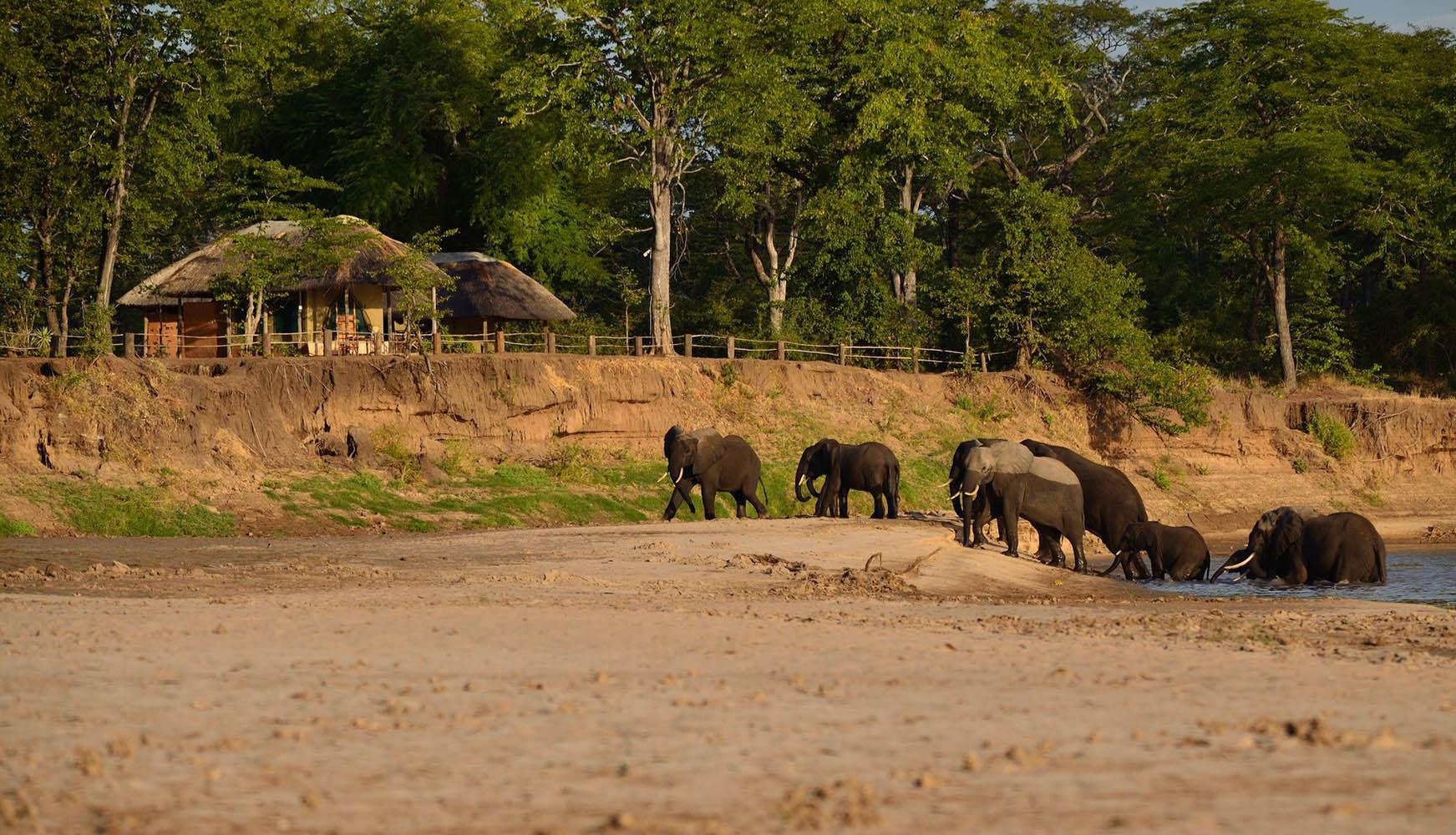 wet-wild-south-luangwa-lake-malawi-11-nights-bush-beach-safaris-tours-malawian-style-specialist-tour-operator-travel-explore-malawi-wildlife-camp-south-luangwa-elephants